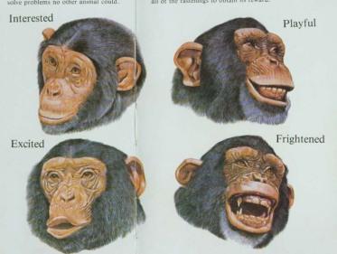 facial-expressions1